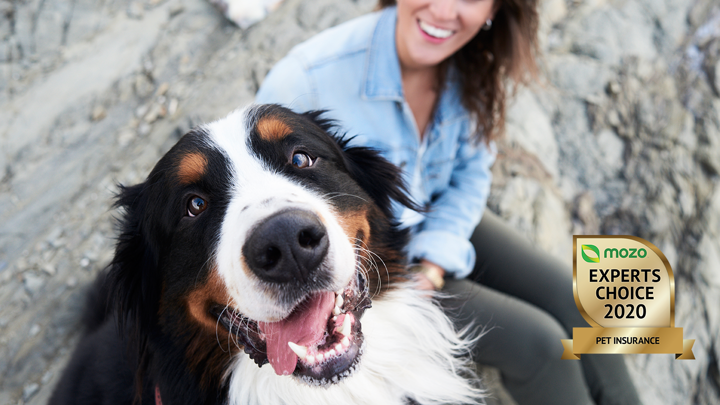 Paw-some news! The Mozo Experts Choice Awards for best pet insurance for 2020 unveiled