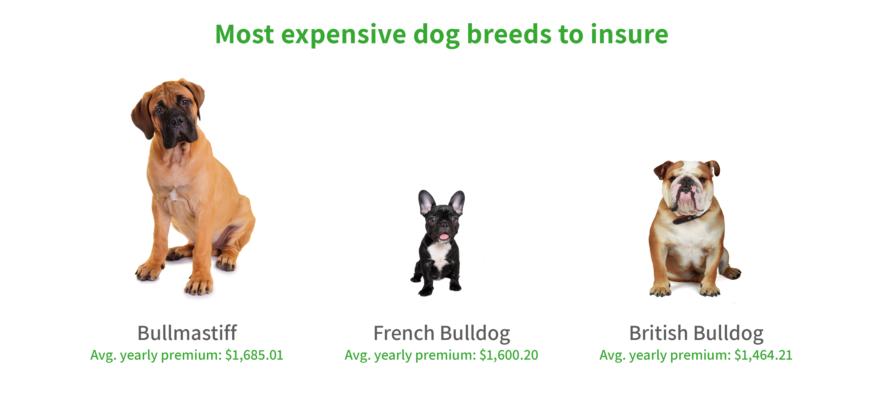 Graphic showing most expensive dog breeds to insure.