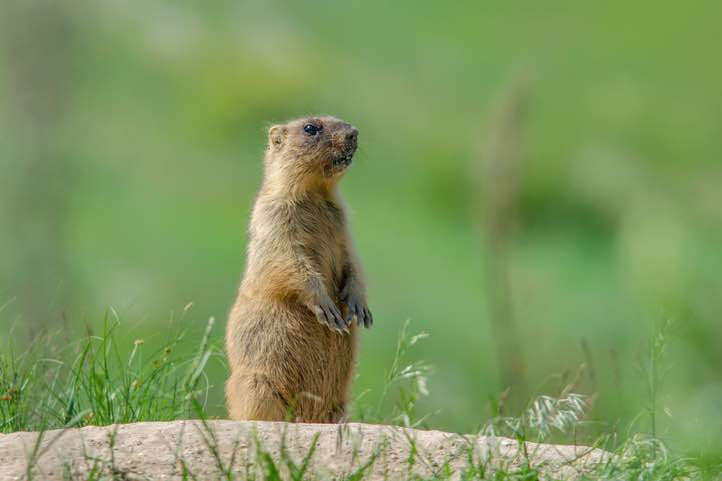 Groundhog Day 2019: How to avoid these common financial mistakes