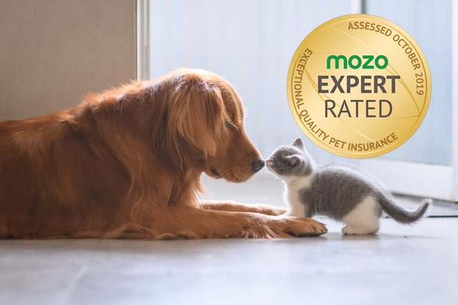 Cat and dog greeting - Knose Pet Insurance.